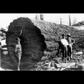 22.Three_men_beside_huge_log