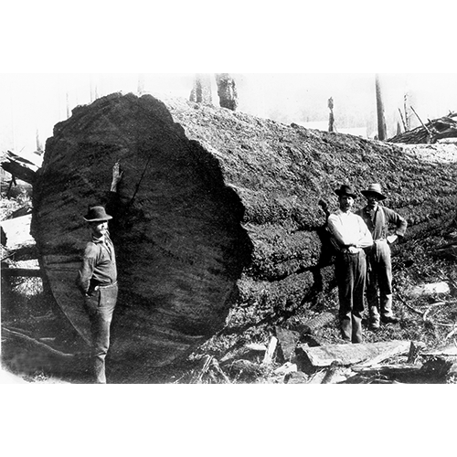 22.Three_men_beside_huge_log